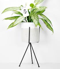 small plant supports madam stoltz small black plant stand