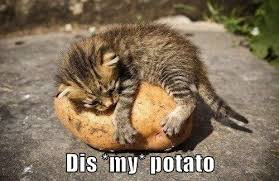 Funny Potato Memes - dis my potato lolcats lol cat memes funny cats funny
