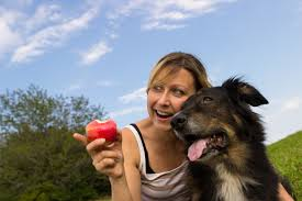 can dogs eat thanksgiving turkey can dogs eat apples the health benefits of feeding fruit to your