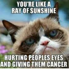 New Grumpy Cat Meme - 21 best grumpy cat memes and funny quotes about love life yourtango