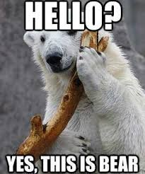 Funny Bear Meme - bitter complaint day funny bears hilarious and humor