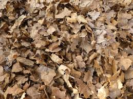 autumn leaves free stock photo image picture decomposed leaf dried