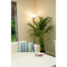 indoor palm delray plants cat palm in 10