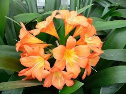 Types Of Planting Flowers - 43 best south african bulbs images on pinterest south africa