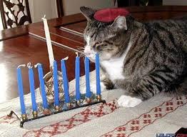 cat menorah hanukkah pet cat menorah global animal