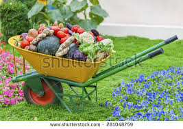 backyard vegetable garden stock images royalty free images
