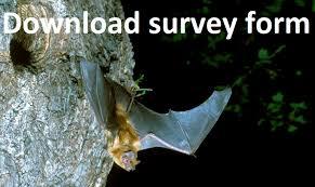 sunset sunrise survey bat conservation trust