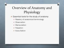 Human Anatomy And Physiology Terminology Chapter 1 The Human Body An Orientation Part A Ppt Download