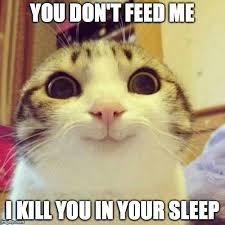 Sleepy Cat Meme - sleep cat meme cat best of the funny meme