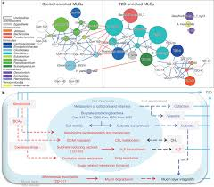 a metagenome wide association study of gut microbiota in type 2
