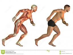 study for anatomy gallery learn human anatomy image