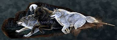 moonlight feathers moonlight run wolves on turkey feathers painted print