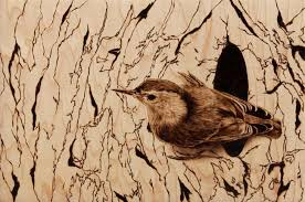 wood burning photorealistic wood burning of a bird by julie bender
