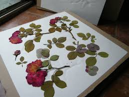flower press make a flower press dried flower crafts