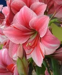 Pretty Types Of Flowers - 1227 best flowers images on pinterest flowers pretty flowers