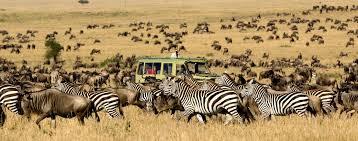 Oregon wildlife tours images African safari tours mango african safaris jpg