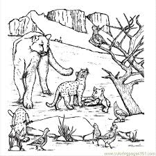mountain lion coloring pages coloring