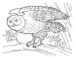 detailed owl coloring detailed owl coloring jpg u2013 color