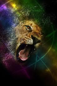 793 best hawaiian lion images on pinterest animals wild