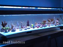 led lights for coral tanks panorama marine actinic led strips produce some unbelievably