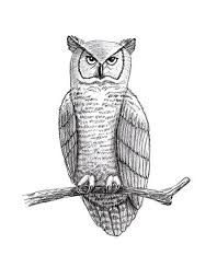 how to draw an owl lovetoknow