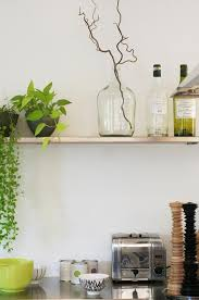 Indoor Vine Plant Send Us Your Indoor Garden Pics Gardenista