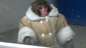 Ikea Monkey Meme - the ikea monkey meme is now half a decade old