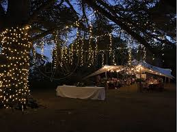 Fairy Light Tree by Gallery Fairy Lights Hire Catering And Gazebo Lights Wedding