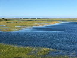 salt marshes teeming with life cape cod martha u0027s vineyard and