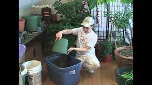 can potatoes be grown indoors youtube