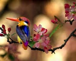 Flowers For Birds And Butterflies - 92 best flowers birds butterflies images on pinterest