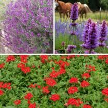 Patio Plants For Sun Hummingbird Plants Plants For Pollinators High Country Gardens