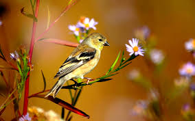 desktop beautiful cool birds live hd hq pictures on animals nature