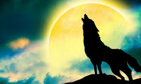 january wolf moon a of forgiveness and transformation
