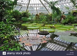 chambre belgique l eau de nénuphar géant dans la chambre les émissions du