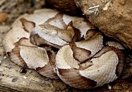 snakes biting dogs are scary but rarely lethal situations