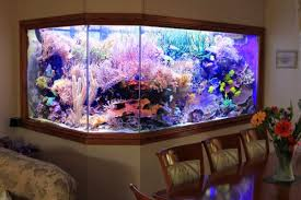 eli u0027s 30 000 liter home reef aquarium and a 150k aquarium