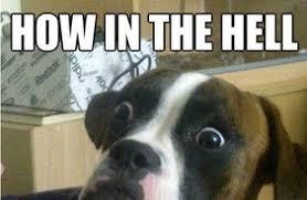 boxer dog meme funny dog meme boxer