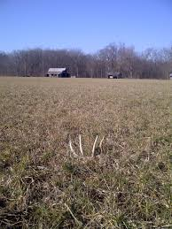When Do Deer Shed Their Antlers by 100 When Do Deer Shed Their Antlers Best 25 Male Deer Ideas