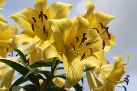 lillies ashley vets