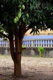 42 best fruits and plants of cambodia images on