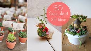 30 succulent gift ideas youtube