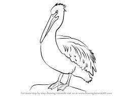 coloring delightful draw pelican bird coloring