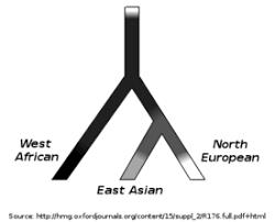 human skin color wikipedia