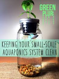 keeping a small scale aquaponics system clean aquaponics system