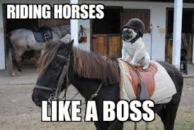 Horse Riding Meme - pugs riding horses riding horses like a boss weknowmemes