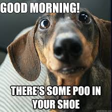 Wiener Dog Meme - good morning there s some poo in your shoe weiner dog quickmeme