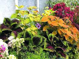 ornamental garden plants 5 great garden combinations of edible and