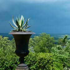 the most poisonous plants in australia hipages com au great succulent container ideas garden pots agaves and gardens
