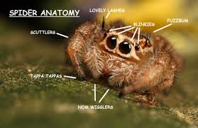 Cute Spider Meme - cute spider anatomy proper anatomy know your meme